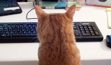 Att ha katter som arbetskamrater